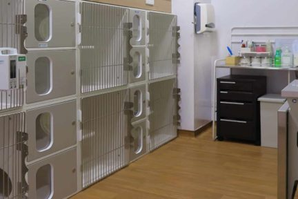 Cat Vet Singapore Cat clinic Singapore